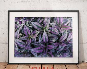 Purple Leaves Print, Housewarming Gift, Botanical Print, Tropical Decor, Leaf Wall Art Print, Nature, Printables  #LeavesCollection Nº3