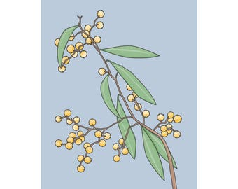 Australian Golden Wattle print