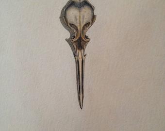 Seabird Skull - Original Watercolour Painting
