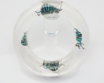 Transparent lucite bracelet with exotic real insects