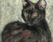 ON SALE Black Cat Art Signed Matted Print By Cori Solomon