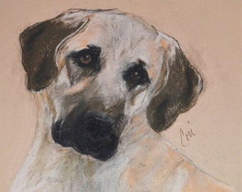 Anatolian Shepherd Dog Art Original Pastel Drawing By Cori Solomon
