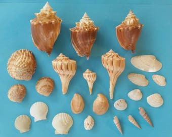 A Touch Of Taupe-Florida Seashells