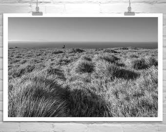 Black and White Photography, Marin County, Point Reyes, California Coast, Ocean Art, Coastal Art, Wild Grass, Deer, Wildlife Art