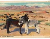 Desert Sweethearts  Donkeys,  Burros Vintage Postcard, adorable, linen postcard