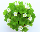 Shamrocks Miniature Polymer Clay Flowers Supplies for Dollhouse and Handmade Gifts