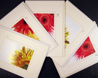 Pack of 5 different Spider Gerbera Greetings Cards