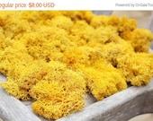 7days Mango Reindeer moss - Clearanced-Preserved in 3 oz bag-Deer foot Moss-Lichens