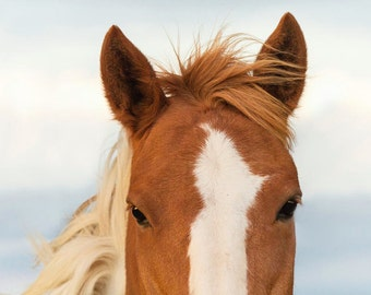 Horse Head Photograph - 11x14 Color or Black and White Horse Equine Photography Print