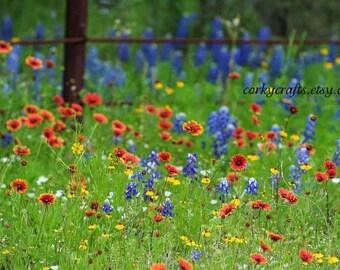 Texas Wildflower Seeds