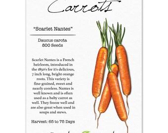Carrot Seeds, Scarlet Nantes (Daucus carota) Non-GMO Seeds by Seed Needs
