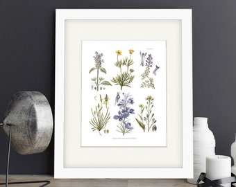 Botanical Print of Meadowland Flowers in Hues of Yellow, Lavender and Blue Adapted from Vintage Illustrations - Plate IV