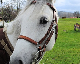 Custom Horse Halter-Bridle Combo with Padded Noseband and Browband