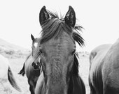Horse Art Print | Black and White Horse Photography | Western Wall Art
