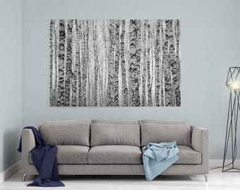 """Birch Trees Canvas - 1.5"""" Deep Canvas Wrap, Birch Trees Forest Wall Art. Black and White Trees"""
