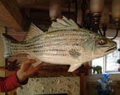 36 inch two sided Striped bass Mobile