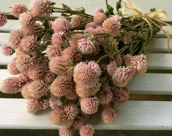DRIED FLOWERS bouquet Light Pink Globe Amaranth Flower Bouquet GOMPHRENA flower bunch, Prim Wedding Shabby cottage floral Dried flower bunch