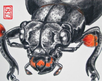 ACEO Carrion Beetle - Archival Print - Insect Drawing