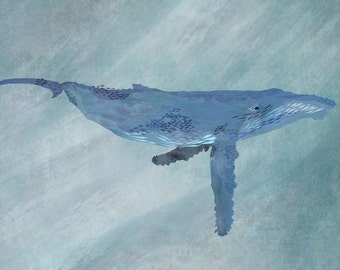 A3 poster – HUMPBACK WHALE