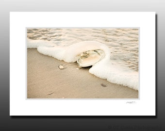 Surf Clam Shell Beach Photography, Small Matted Print, LBI Art, Cubicle Decor, Ready for Framing, Fits 5x7 inch Frame