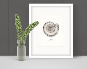 Coastal Decor Vintage Sundial Sea Shell Giclee Print