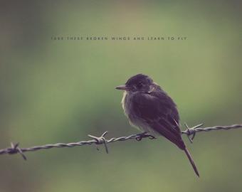 Black Bird Singing, Bird Photography, Bird Print, Bird Art, Bird Photo, Bird Gift, Black Bird Print, Black Bird Art, Black Bird Photo