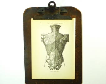 1921 Anatomy Illustration, Muscles of the Back,  Mixed Media Collage Supply, FREE SHIPPING