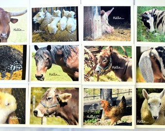 Farm Animals Saying Hello - Notecards
