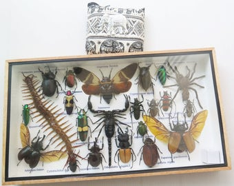 3D Real Insect Insects Bugs Box Frame Framed Display Taxidermy Centipede Eupatorus Tarantura Spider Beetle Cicada Scorpion Entomology Rare