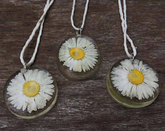 Preserved English Daisy Dome Pendant Necklace