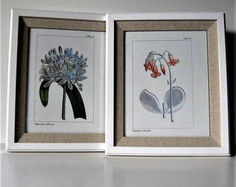 """Framed botanical set, 2 Curtis Wildflower book prints, Shabby white frames, 11"""" x 13"""", French Country, English Country decor, gift idea"""
