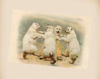 Polar Bears Dance Around The Fire - New 4x6 Vintage Card Image Photo Print FN01
