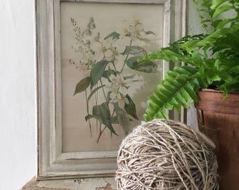 Vintage Style Botanical Print White Flower