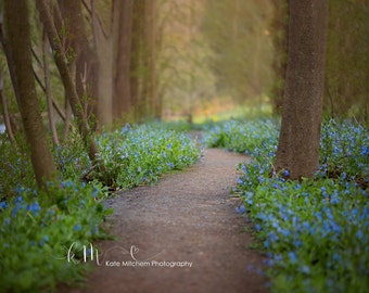 Digital Backdrop of Bluebell Pathway
