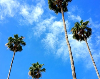 Palm Trees Photography in Los Angeles, California, Family of Palm Trees, California Photography. Los Angeles Photography. LA Photo. LA Art