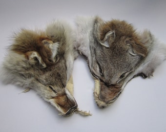 One  Coyote Face Real Taxidermy Tail Fur Crafts Leather Mountain Man