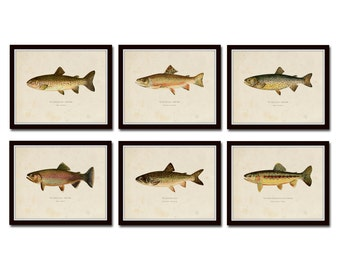Vintage Trout Print Set No. 2, Natural History Art, Giclee, Art, Print Set, Woodland Art, Fish Print, Trout, Fly Fishing Art, Angler Art