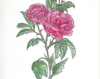 Original Pen and Ink Drawing with Watercolor Wash of Pink Roses - 9 in x 12 in
