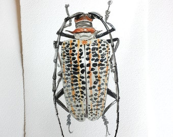 Watercolour painting- Longhorn Beetle with black spots, beetle illustration, Insect painting, Beetle wall art, Beetle artwork, Garden lover