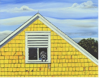 A Room with a View 8 X 10 Print Racoon in the Barn Annapolis Valley Nova Scotia