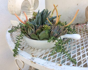 Succulent Planter Vintage Milkware Bowl repurposed Succulent Centerpiece decoration live plant window sill desk table top decor garden