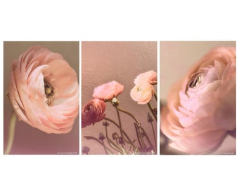 Pink Ranunculus Print Set - Set of 3 ranunculus flowers 8x10 photo peach still life photography 11x14 ranunculus wall art 16x20 mothers day