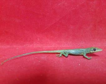 Taxidermy Lizard Anolis Carolinensis#2-Anole Reptile--frog-bat-ant-rat-mouse