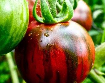 Black Zebra Cherry Tomato OP,  10+ seeds