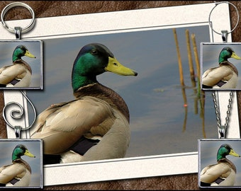 Mallard Photo Note Card Set  - Mallard Pendant, Mallard Keyring, Mallard Ornament, Mallard Wine Charm - Mallard Greeting Card Set (GP28)