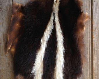 vintage skunk pelt / animal pelt / cabin decor