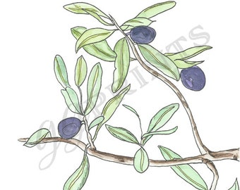 Olive Branch Clipart // Tuscan Clipart