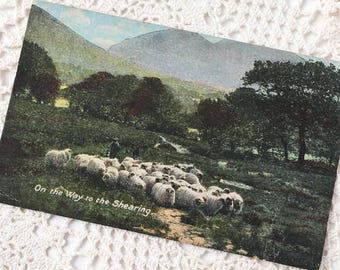 "Vintage Postcard ""On the Way to the Shearing"" JWB Series No 401"