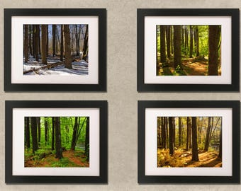 The Woods: winter, spring, summer, fall, new england, forest, natural, nature, four seasons print collection, home decor. wall decor