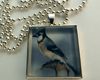 Bluejay photo pendant necklace, bird necklace , nature necklace